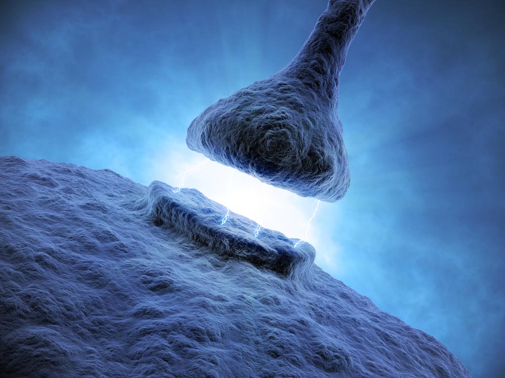 Synapsi kuva