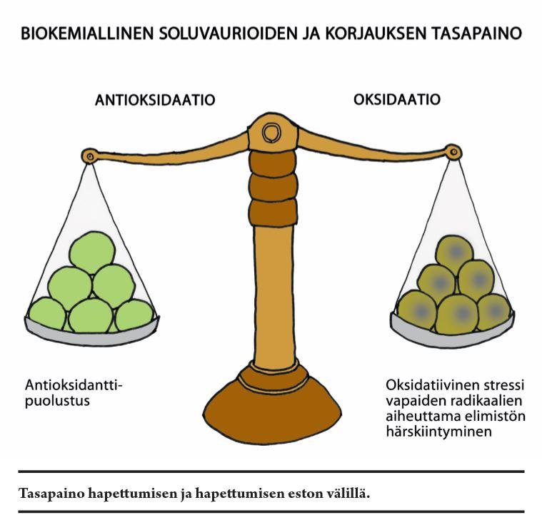 biokemiallinen soluvaurioiden ja korjauksen tasapaino